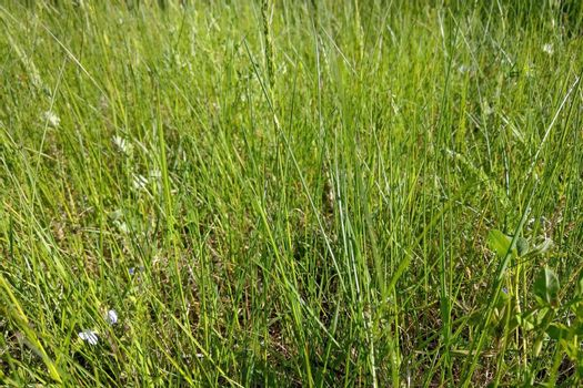 Nice view of the green meadow grass. Background