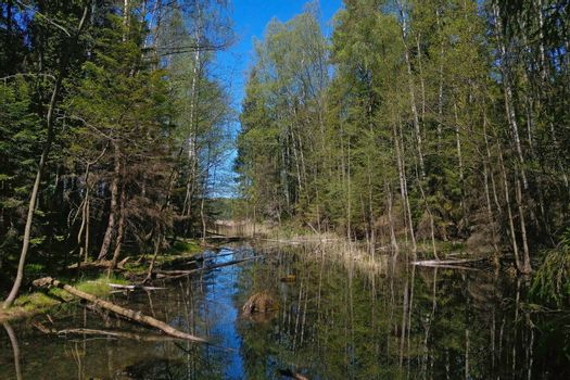 Small boggy lake in the forest on a sunny day