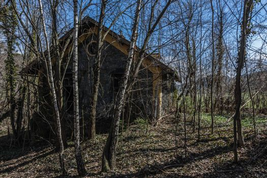 abandoned house with trees in a forest