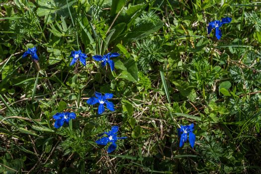 little blue flowers in green grass and forest