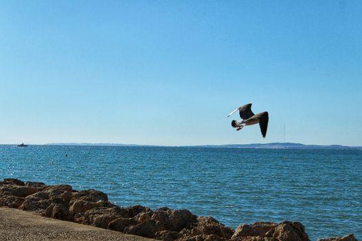 Seagull and breakwater under the sun in Santa Pola, Spain