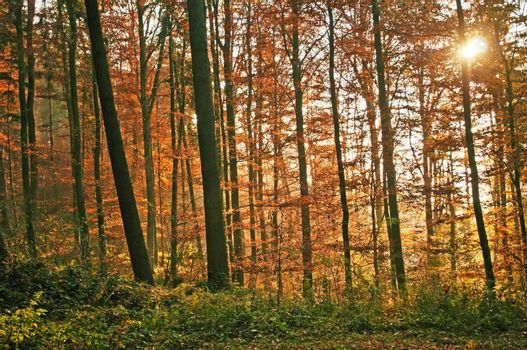 autumnal painted forest