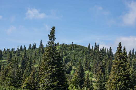 Peak trees in the mountains with blue sky in summer