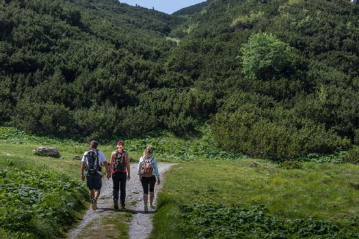 three hikers against a path on a mountain with trees