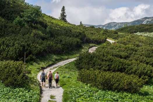 three hikers go a long way in the mountains with trees