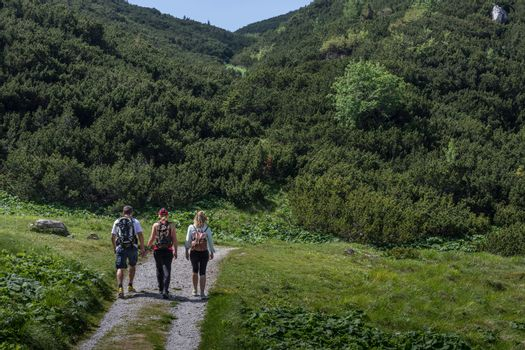 three hikers walk a path in the mountains with trees