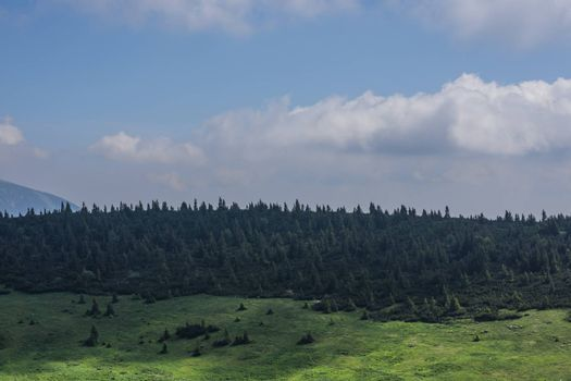 trees and hills with sky when hiking in summer