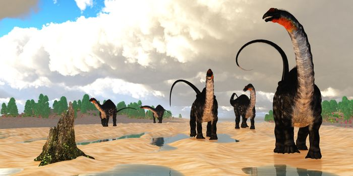 A herd of Apatosaurus dinosaurs amble down an estuary tidal flat at low tide during the Jurassic Period.