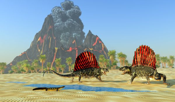 A Diplocaulus dinosaur watches as two Dimetrodon reptiles fight over territory and mating rights.