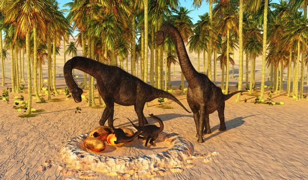 Two Brachiosaurus parents watch their offspring hatch from dinosaur eggs in a nest that they nurtured.