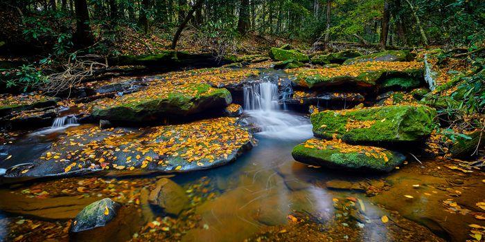 Small waterfall on Flat Lick Creek near Gray Hawk, Kentucky.