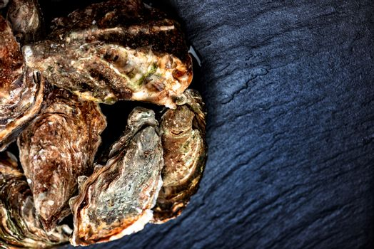Raw oysters on stone surface with copy paste