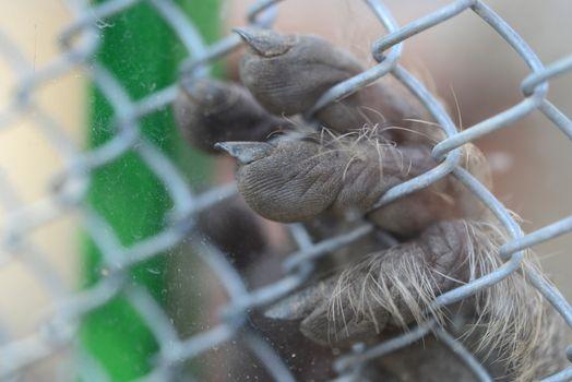 monkey fingers