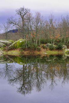 Oak Forest, Guadarrama National Park, Spain