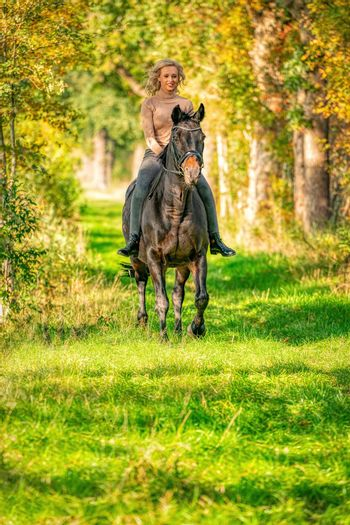 Beautiful blonde female horse rider on a horse without sadle, in the woods in the setting sun, autumn day. Horse riding, horseback riding.