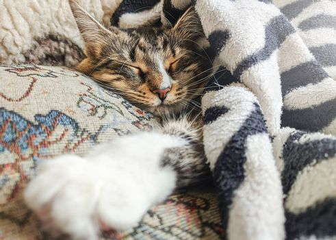 Cute striped kitten lying covered white light blanket on bed. . Concept of adorable pets