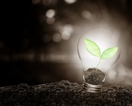 Light bulb with plant growing inside on soil ecology, Concept of