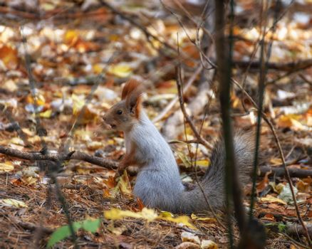 Squirrel sitting on the ground among the leaves