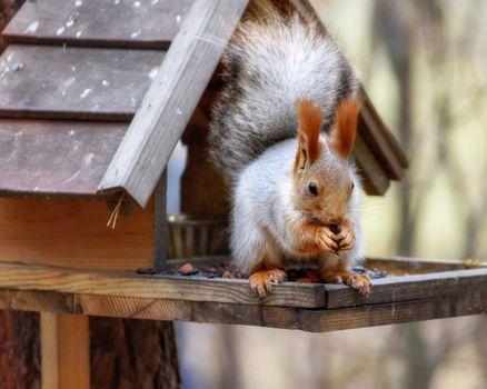 Squirrel sitting in a bird feeder