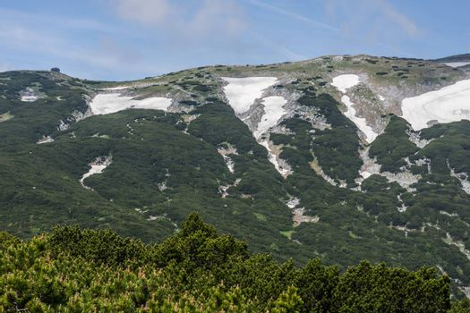 mountain with snow and green plants in summer while hiking