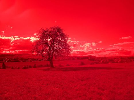 Infrared photo of an old pear tree in a landscape in Germany