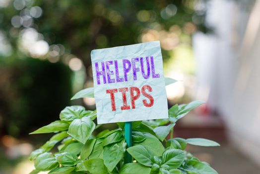 Word writing text Helpful Tips. Business concept for Ask an Expert Solutions Hints Consulting Warning Plain empty paper attached to a stick and placed in the green leafy plants.