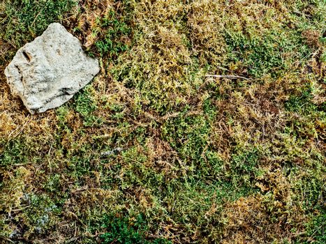 moss texture background. Top view of natural green and brown moss with rock in corner. Can use as forest background for cosmetic mock up. Copy space for text or design. Studio shot