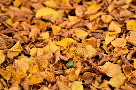 autumn leaves in yellow and brown on the floor