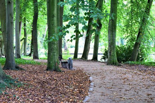 Path in the park and a park bench