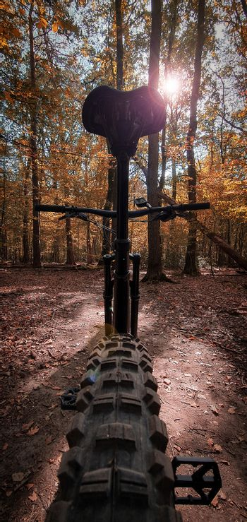 Low angle view of a mountain bike on a beautiful autumn forest trail with sun shining through the trees. Mountain biking concept. Freedom and recreation concept.