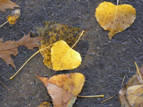 fallen painted leaves in autumn on a street in sun and shadow