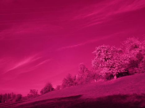 Infrared photo of trees in autumn
