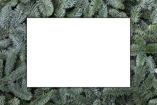 Blank greeting card over Natural noble fir Christmas tree background , copy space for text
