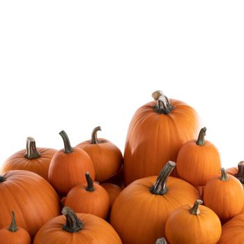 Heap of many orange pumpkins of the same kind isolated on white background , Halloween concept