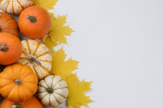 Many colorful pumpkins and maple leaves frame isolated on white background , autumn harvest , Halloween or Thanksgiving concept