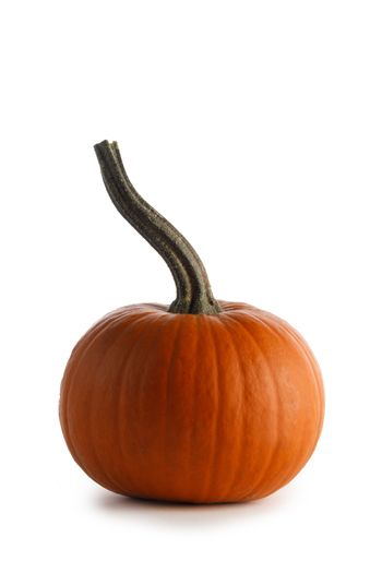 One small orange pumpkin closeup isolated on white background