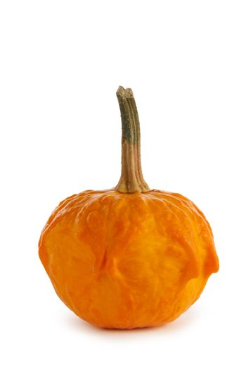 One small unusual orange pumpkin isolated on white background , Halloween concept