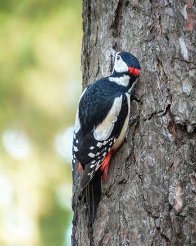 A woodpecker sits on a tree trunk