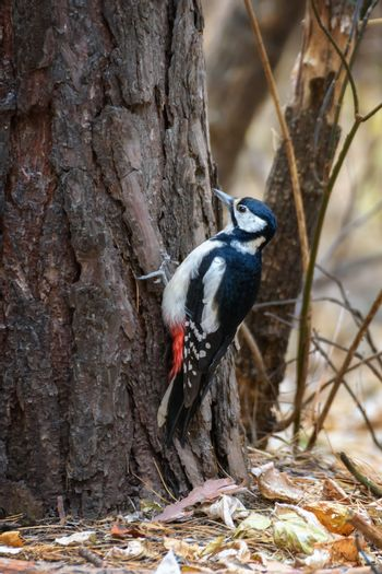 A woodpecker sits on a tree trunk