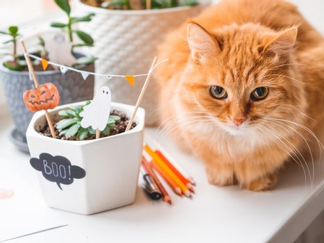 Cute ginger cat and flower pots with handmade decorations for Halloween. Painted ghost and pumpkin in flower pot with succulent plant. Cozy home.