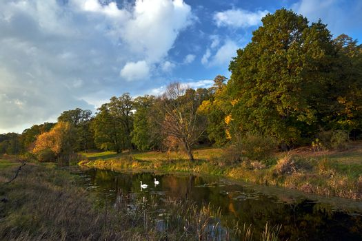 Landscape with swans swimming on the pond and a dry tree during autumn