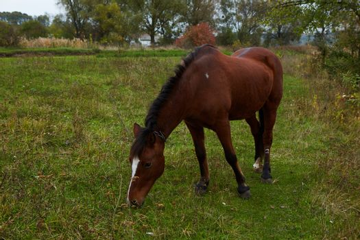 Beautiful horse on the green grass pasture