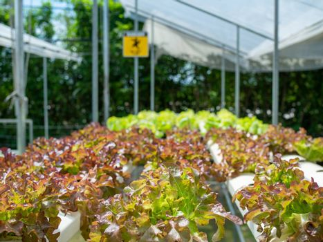 Organic vegetable plots For making healthy food.