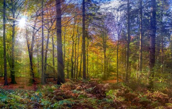 View into a colorful and vibrant autumn forest with fall foliage and sunlight beams
