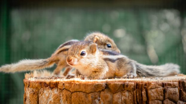 Cute abandoned Baby squirrels looking out for their mother