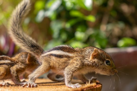 Hungry little Baby squirrels looking out for their mother