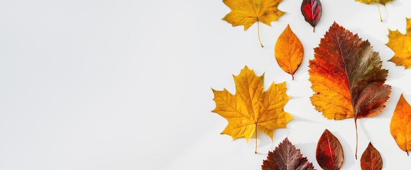 Bright and colorful autumn leaves. Top view on monochrome geometry with light and shadow. Minimalism. Fall season. Background with copy space.