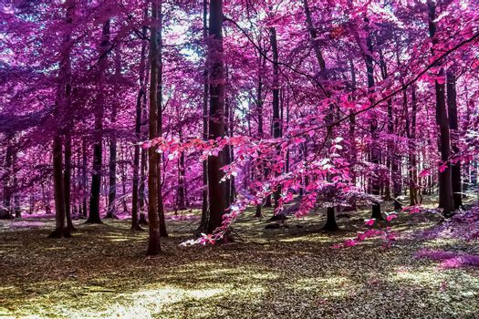 Beautiful pink and purple infrared panorama of a countryside lan
