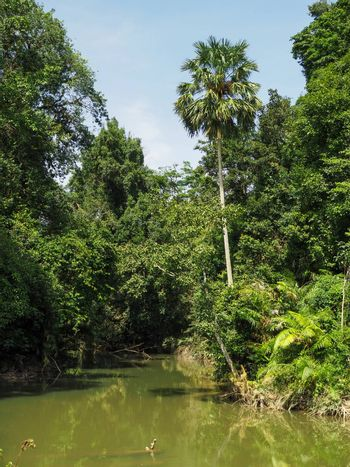 The scenery of the river, the rainforest, consists of rivers, trees, coconut trees.
