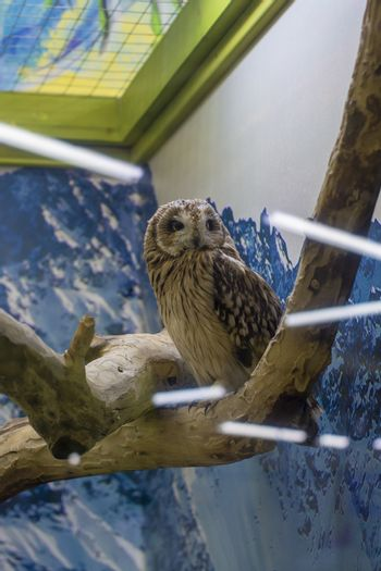 Owl on a branch, glare of lamps. Pet.